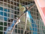 различные попугаи от производителя