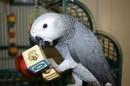 продам попугая Жако Девочки и мальчики